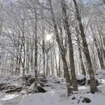 In veste invernale. Fotografia di R. Ardigò - 1° Premio al concorso fotografico 2010, sezione paesaggi.