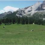 Verdi sentinelle tra i prati. Fotografia di M.L. Ardigò. Concorso fotografico 2010, sezione paesaggi.