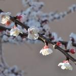1° Premio concorso foto botaniche 2012: