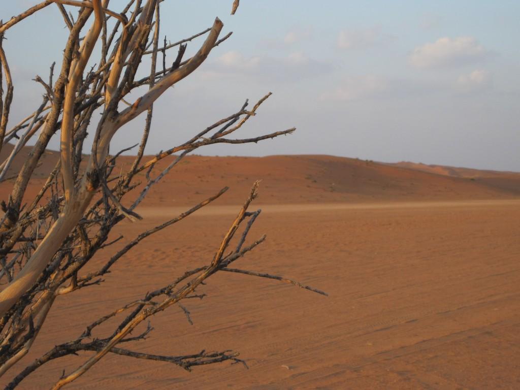 """1° Premio Concorso Paesaggi 2012: """"Deserto mon amour"""" di Letizia Mussano"""