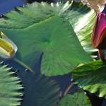4° Premio concorso foto botaniche 2012: