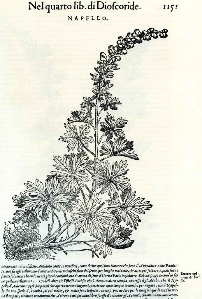 """Elogio delle erbacce: l'aconito. Illustrazione tratta dai """"Discorsi"""" di Mattioli"""