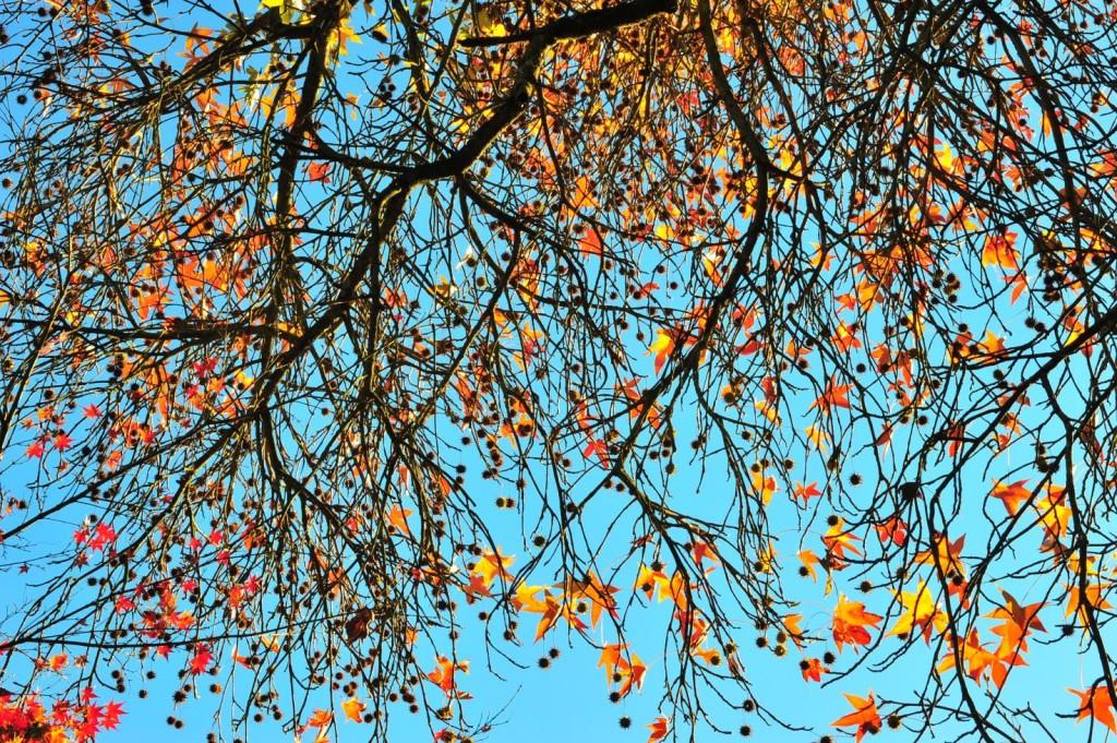 Una giornata perfetta, Foto di Ninfa -  autrice Beatrice Venturini Sylos Labini