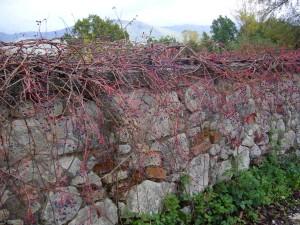 """""""Muro di campagna"""", di Marisa Bruno. 2° classificato"""