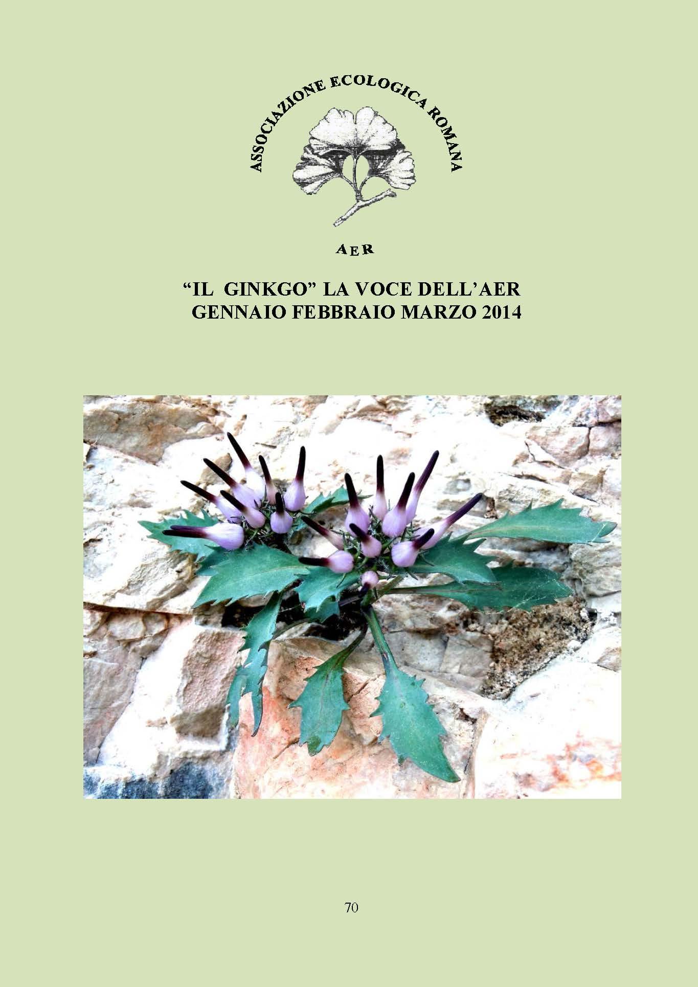 """La rivista """"Il Ginkgo, la voce dell'AER"""" riporta le attività dell'associazione: gite ed escursioni, programma e relazioni sulle conferenze ed articoli di giardinaggio e botanica."""