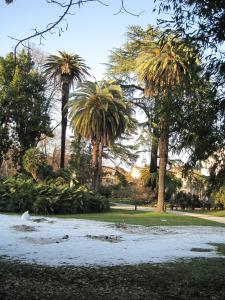 Le palme innevate dell'Orto Botanico di Roma