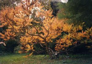 Abito d'autunno