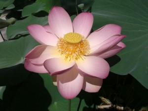 Un fiore indimenticabile
