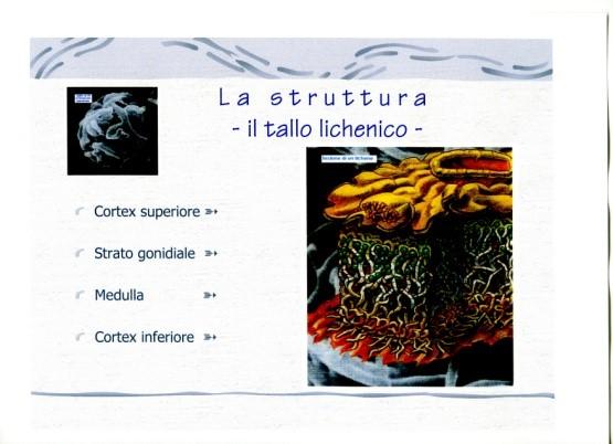 figura 2 tallo lichenico