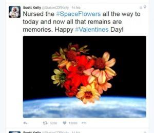 tweet fiori