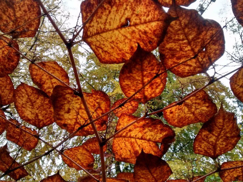 autunno in trasparenza