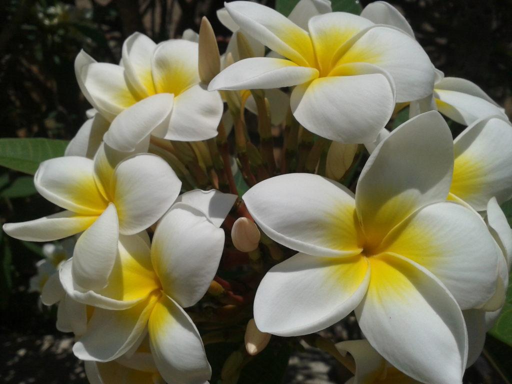 Ghirlanda fiorita