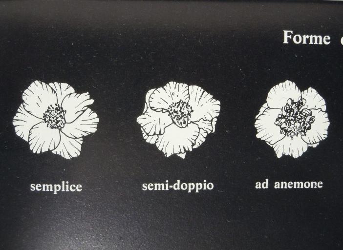 Le caratteristiche dei fiori (1)