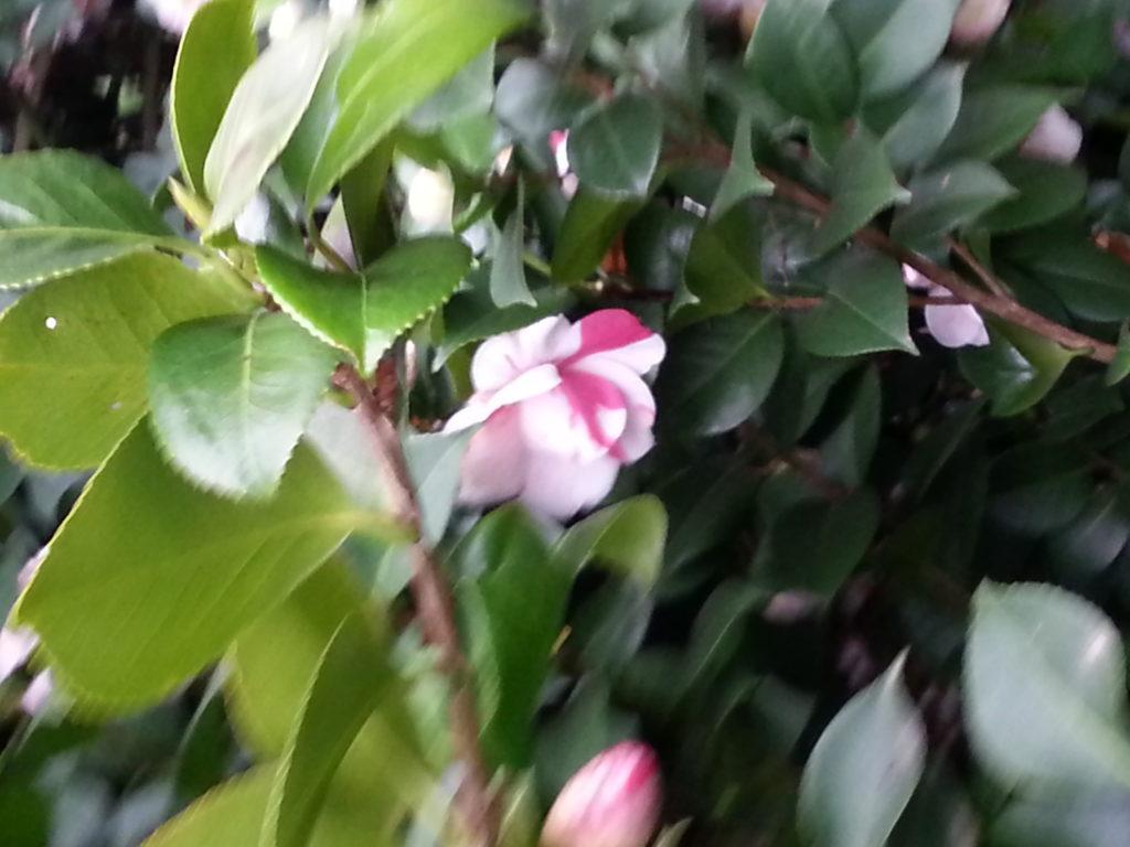 gardenia a san lorenzo