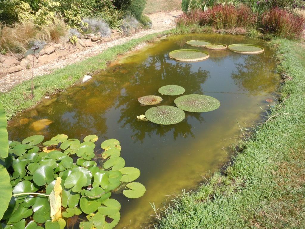 5 Villa Bricherasio Victoria regia amazonica e Euryale ferox